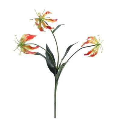 Orange Gloriosa Spray [50 cm]