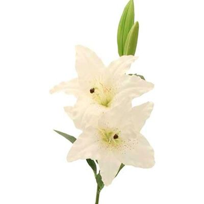 Lily White [80 cm]