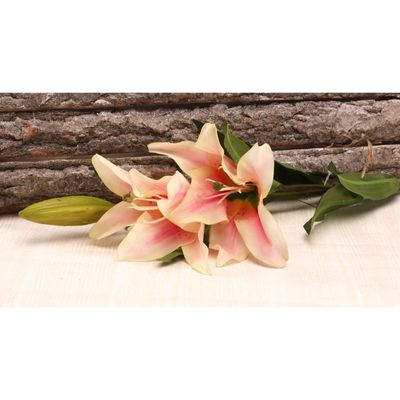 Small Lily Pink [61 cm]
