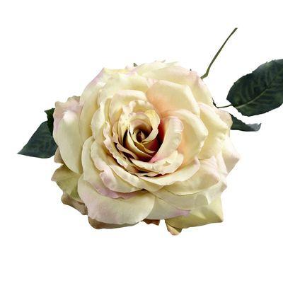 Single Aidde Rose Cream Blush [74 cm]