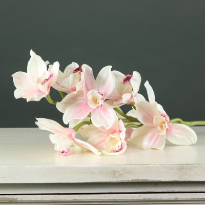 Tintagel Cymbidium Orchid Light Pink