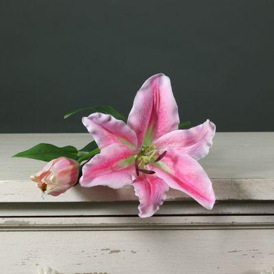 Tintagel Lily Dark Pink