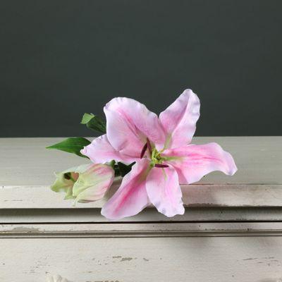 Tintagel Lily Light Pink