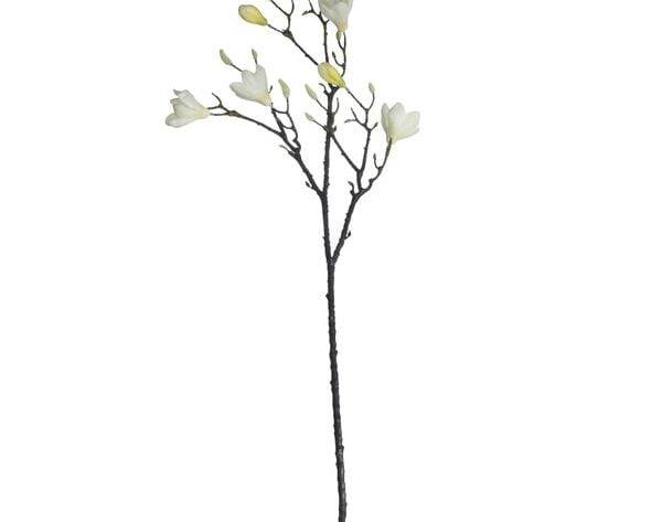 Magnolia Branch Cream