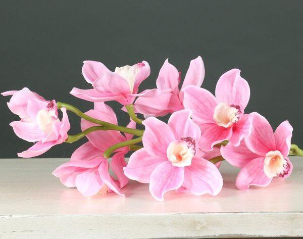 Tintagel Cymbidium Orchid Pink