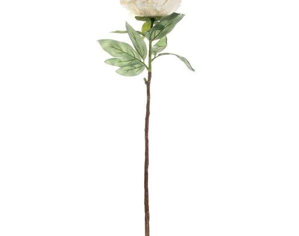 Single Peony Cream [71 cm]