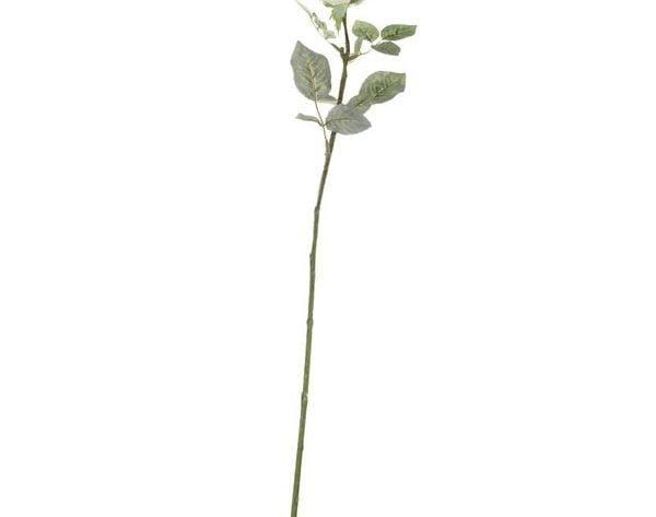 Single Olivia Rose Cream [72 cm]