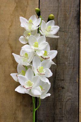 White Phalaenopsis Spray [45 Inches]