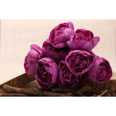 Peony Bunch Purple [40 cm]