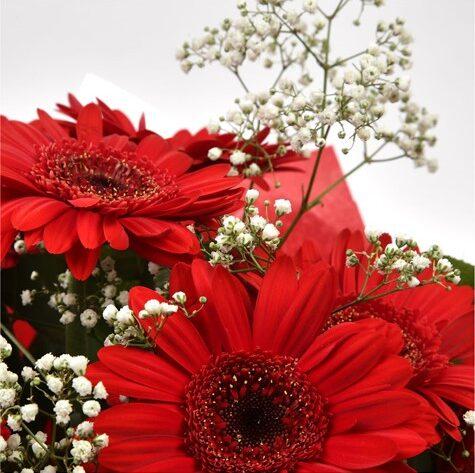 Red Glamour Gerberas